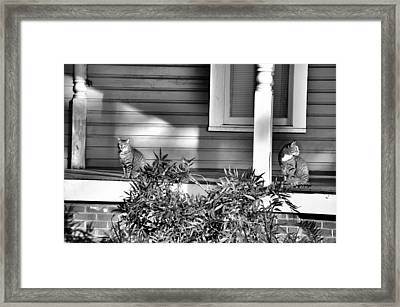 Looking Back Framed Print by Jan Amiss Photography