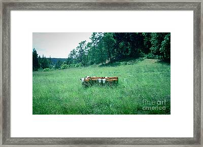 Framed Print featuring the photograph Looking Back by Peter Simmons
