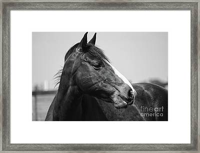 Looking Bw Framed Print by J M Lister