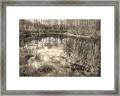 Looking Down Framed Print by Betsy Zimmerli