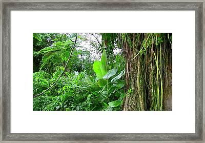 Looking Down From Yokahu Framed Print by Walter Rivera Santos