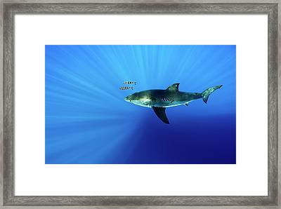Looking Down Framed Print by Shane Linke