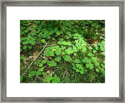 Looking For A Four-leaf Clover Framed Print by Valerie Ornstein