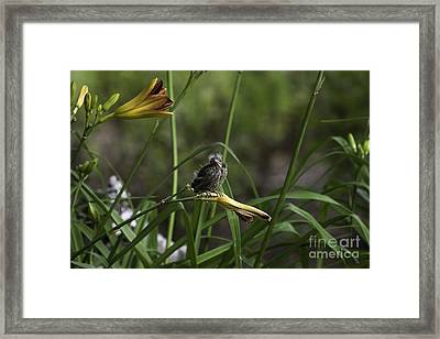 Looking For A Friend 2 Framed Print by E Mac MacKay