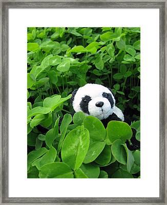 Framed Print featuring the photograph Looking For A Lucky Clover by Ausra Huntington nee Paulauskaite