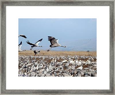 Looking For A Parking Place.... 2 Framed Print by Arik Baltinester