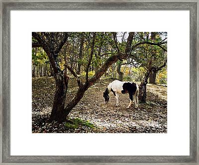 Looking For Apples Framed Print