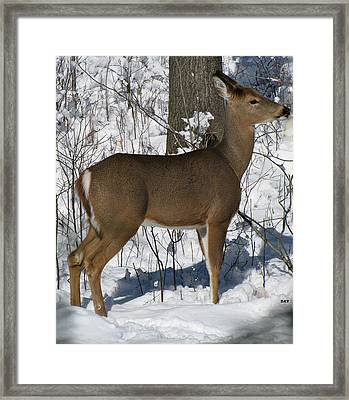 Looking For Baby Framed Print
