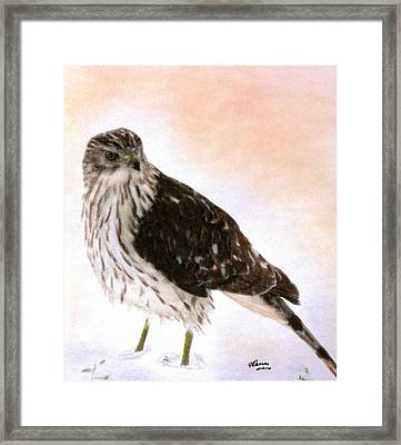 Looking For Breakfast Framed Print by Angela Davies