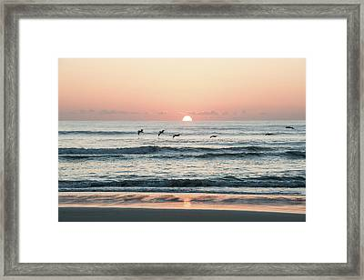 Looking For Breakfest Framed Print
