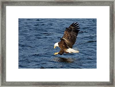 Looking For Fish Framed Print by Larry Ricker