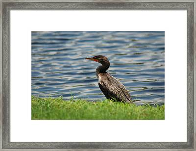 Looking For Food Framed Print by Clay Peters Photography