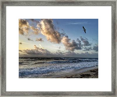 Looking For Food. Framed Print