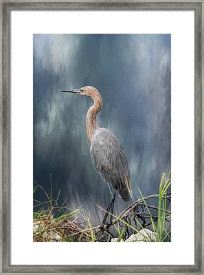 Framed Print featuring the photograph Looking For Food by Kim Hojnacki