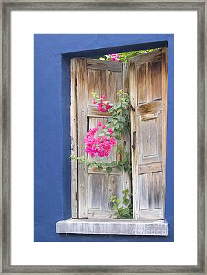 Looking For Light Framed Print by Elvira Butler