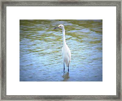 Looking For Lunch  Framed Print by Mandy Shupp