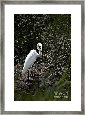 Framed Print featuring the photograph Looking For Lunch by Tamyra Ayles