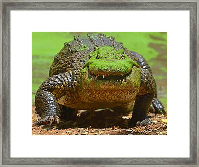 Looking For Lunch Framed Print