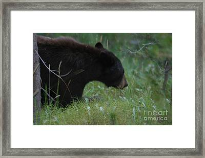 Looking For Lunch Framed Print by Robert Torkomian