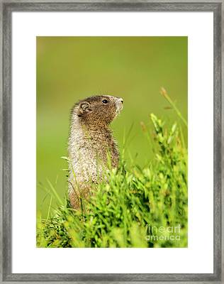 Looking For Mom Framed Print by Mike Dawson
