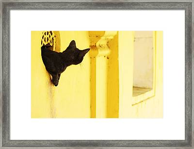 Looking For Mouse Framed Print by Prakash Ghai