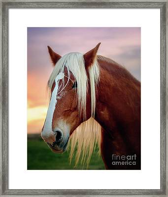 Looking For My Master Framed Print by Tamyra Ayles