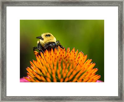 Looking For Nectar Framed Print