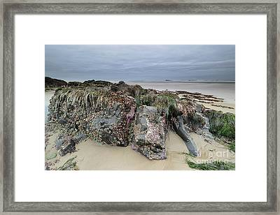 Looking For Sea Creatures Framed Print