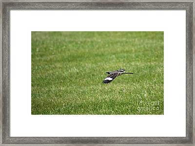 Looking For The Cat Framed Print