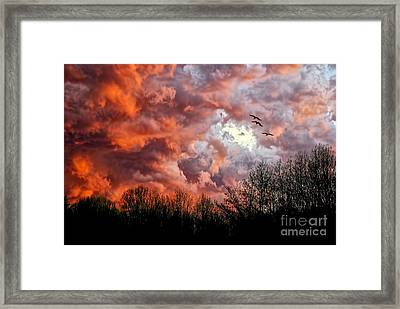 Looking For Trouble Framed Print by Lois Bryan