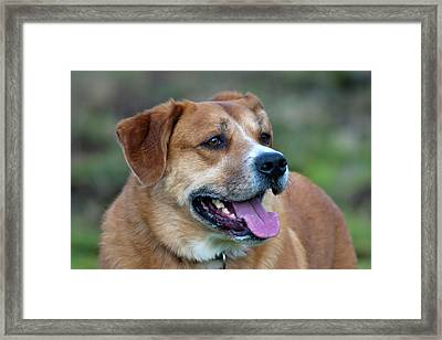 Looking For You Framed Print by Vicki Field