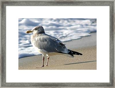 Looking Forward Framed Print by Mary Haber