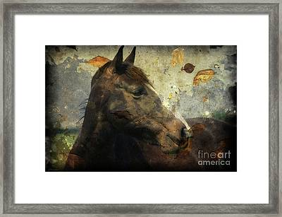 Looking I Fall For You Framed Print by J M Lister