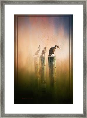 Looking Into The Mist Framed Print