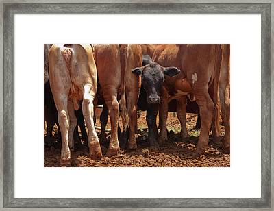 Framed Print featuring the photograph Looking Out The Rear by Roger Mullenhour