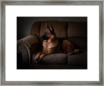 Looking Out The Window - German Shepherd Dog Framed Print