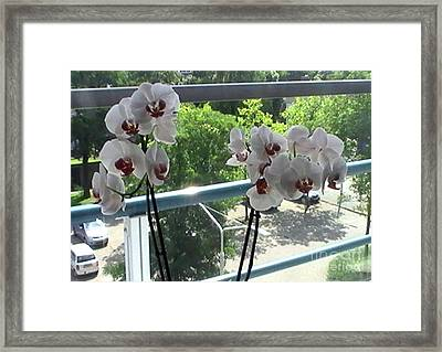 Looking Outside In Framed Print