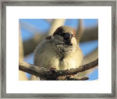Looking Over The Nest Framed Print by Lisa Jayne Konopka
