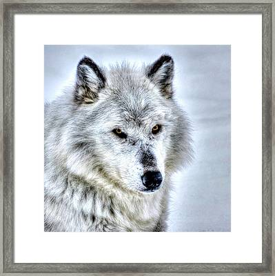 Looking Pretty Framed Print by Don Mercer