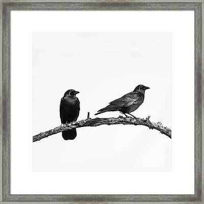 Looking Right Two Black Crows On White Square Framed Print by Terry DeLuco