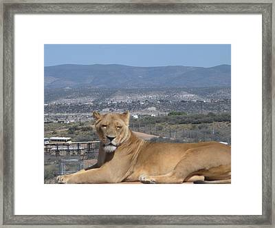 Looking The World Over Framed Print by Jeanette Oberholtzer