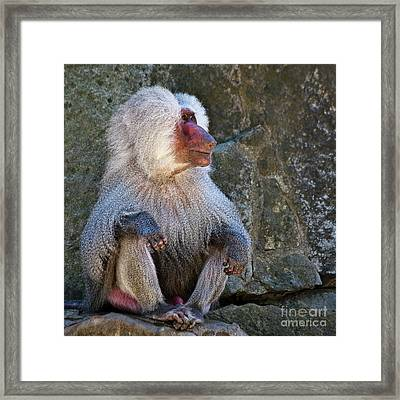 Looking To The Left Framed Print by Heiko Koehrer-Wagner