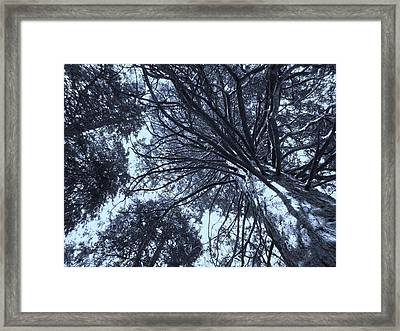 Looking Towards The Light Framed Print
