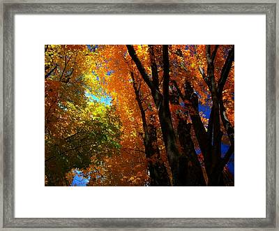 Looking Up 5 Framed Print by Larry Ney  II