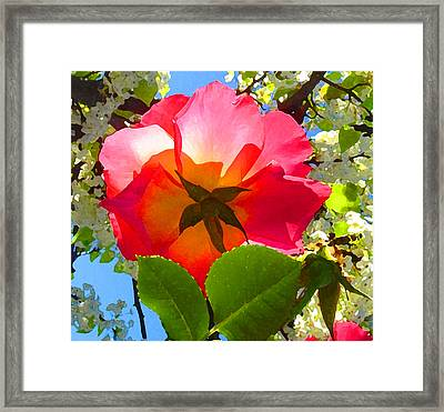 Looking Up At Rose And Tree Framed Print