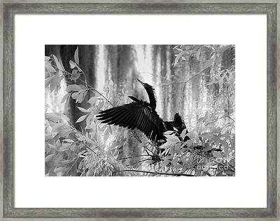 Looking Up, Black And White Framed Print by Liesl Walsh