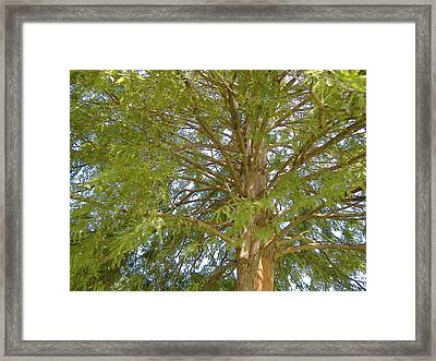 Looking Up Framed Print by Diane Ferguson