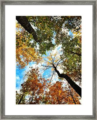 Looking Up During Autumn Framed Print