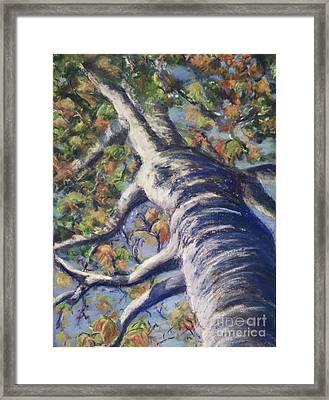 Looking Up - Fall Framed Print
