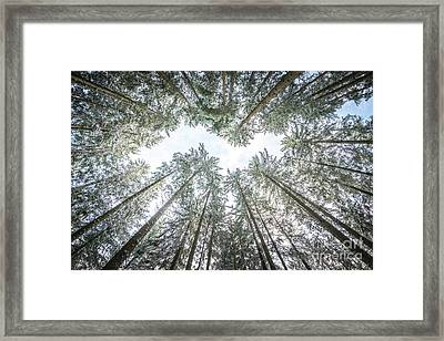 Framed Print featuring the photograph Looking Up In The Forest by Hannes Cmarits